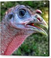 Turkey Named Thanksgiving Acrylic Print