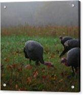 Turkey On A Foggy Morning Acrylic Print