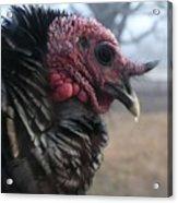 Turkey Portrait 1 Acrylic Print