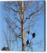 Turkey Vulture Tree Acrylic Print