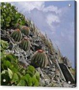 Turks Cap Cactus Acrylic Print