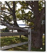 Turn At The Tree Acrylic Print