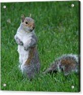 Turning Squirrel Acrylic Print