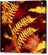 Turning To Autumn Acrylic Print