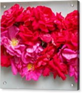 Turning Up Roses Acrylic Print