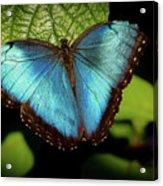 Turquoise Beauty Acrylic Print