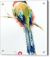 Turquoise-browed Motmot  Bird Acrylic Print