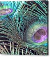 Turquoise Feather Acrylic Print