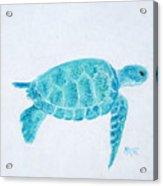 Turquoise Marine Turtle Acrylic Print