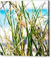 Turquoise Splender Acrylic Print