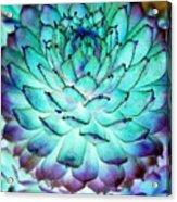 Turquoise Succulent 1 Acrylic Print