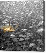 Turtle And Fish School Acrylic Print