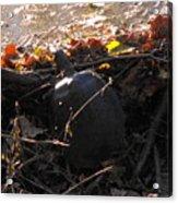 Turtle At Deer Creek Acrylic Print
