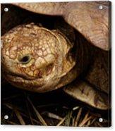 Turtle Closeup Acrylic Print