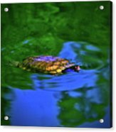 Turtle Coming Up For Air 003 Acrylic Print