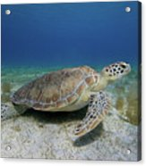 Turtle Cove Acrylic Print