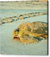 Turtle Day Acrylic Print