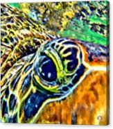 Turtle Eye Acrylic Print