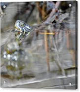 Turtle Eye Reflection Acrylic Print