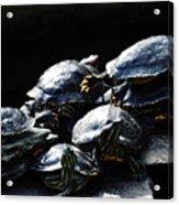 Turtle Family Acrylic Print