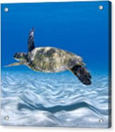 Turtle Flight -  Part 2 Of 3  Acrylic Print