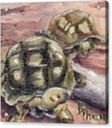 Turtle Friends Acrylic Print