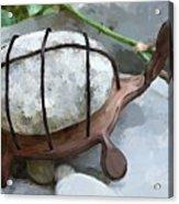 Turtle Full Of Rocks Acrylic Print