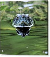 Turtle Head Acrylic Print