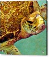 Turtle Life Acrylic Print