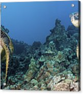 Turtle Panorama Acrylic Print by Dave Fleetham - Printscapes