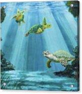 Turtle Reef Acrylic Print