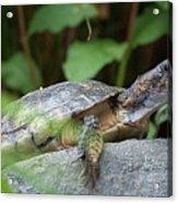 Turtle Rock Acrylic Print