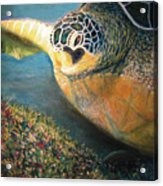 Turtle Run Acrylic Print