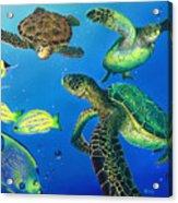 Turtle Towne Acrylic Print