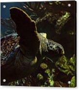 Turtle Wave Acrylic Print
