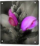 Turtlehead Flower Acrylic Print
