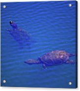 Turtles At The Lily Pond 001 Acrylic Print