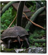 Turtles Butt Acrylic Print