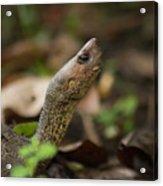 Turtle's Neck  Acrylic Print