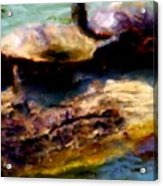 Turtles On A Log Acrylic Print