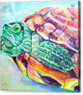 Turttleneck Acrylic Print