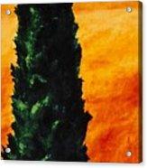 Tuscan Cypress Acrylic Print