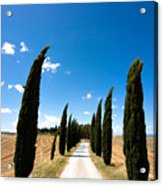 Tuscan Cypress Landscape Acrylic Print