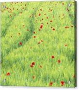Tuscan Monet Acrylic Print