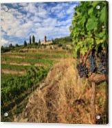 Tuscan Vineyard And Grapes Acrylic Print