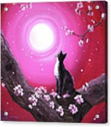 Tuxedo Cat In Cherry Blossoms Acrylic Print