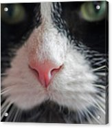 Tuxedo Cat Whiskers And Pink Nose Acrylic Print