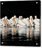 Twelve White Pelicans On A Dark Background. Acrylic Print