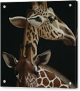 Twiga Acrylic Print