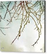 Twigs And Winter Sky Two Acrylic Print